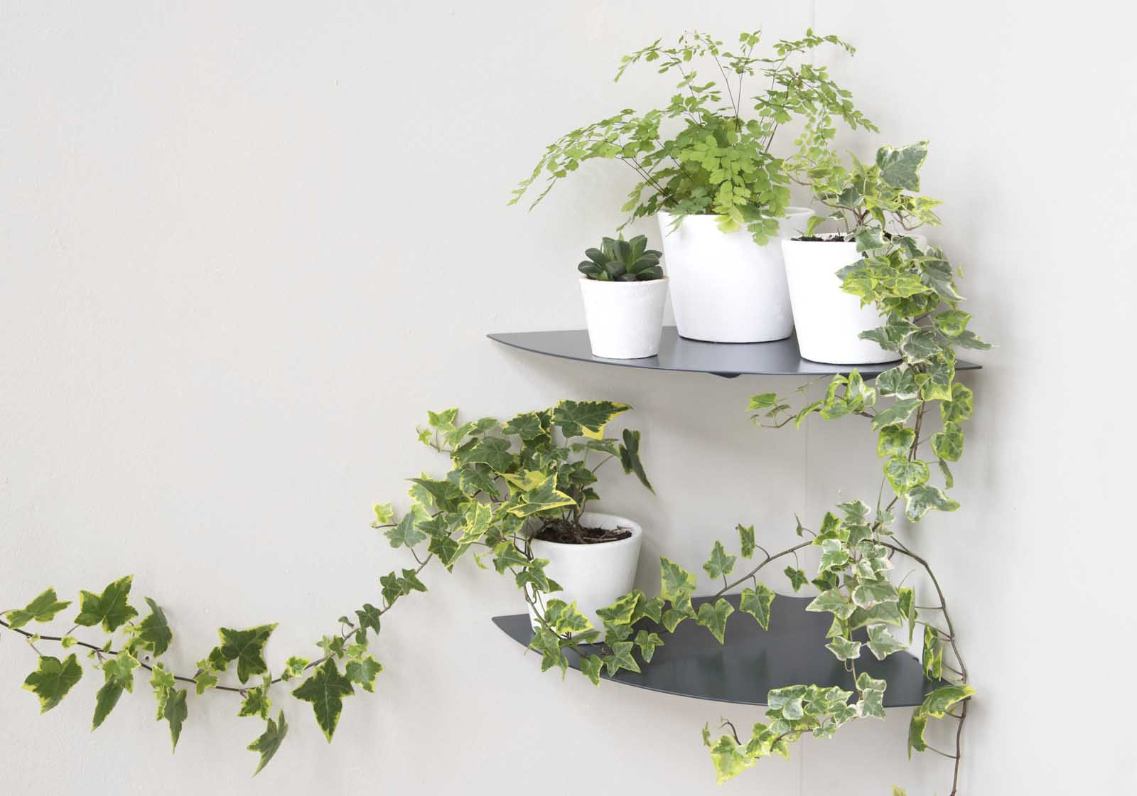 Plante Sur Les Murs comment construire le mur végétal parfait ?